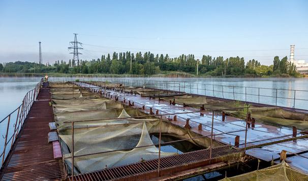 Custom Cloud SCADA Development for Water Use in Fish Hatcheries